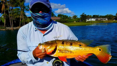 Fly Fishing in Florida - bass fishing the moon phase