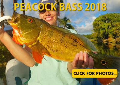 2018 Peacock Bass Pictures