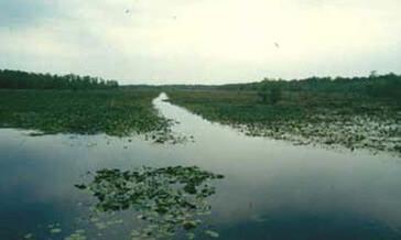 Lake Miccosukee Fl