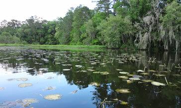 Lake Iamonia Fl