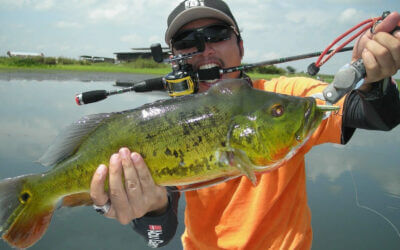 Peacock Bass Fishing in Florida: Local Travel Guide
