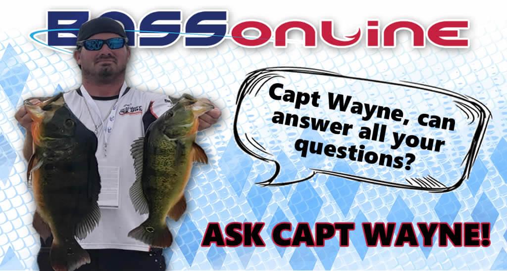Capt Wayne fellows Questions