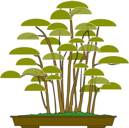 bonsai-styles-yose-ue