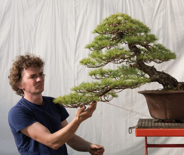 Bonsai Today Page 9 Online Magazine For Beginners And Experts