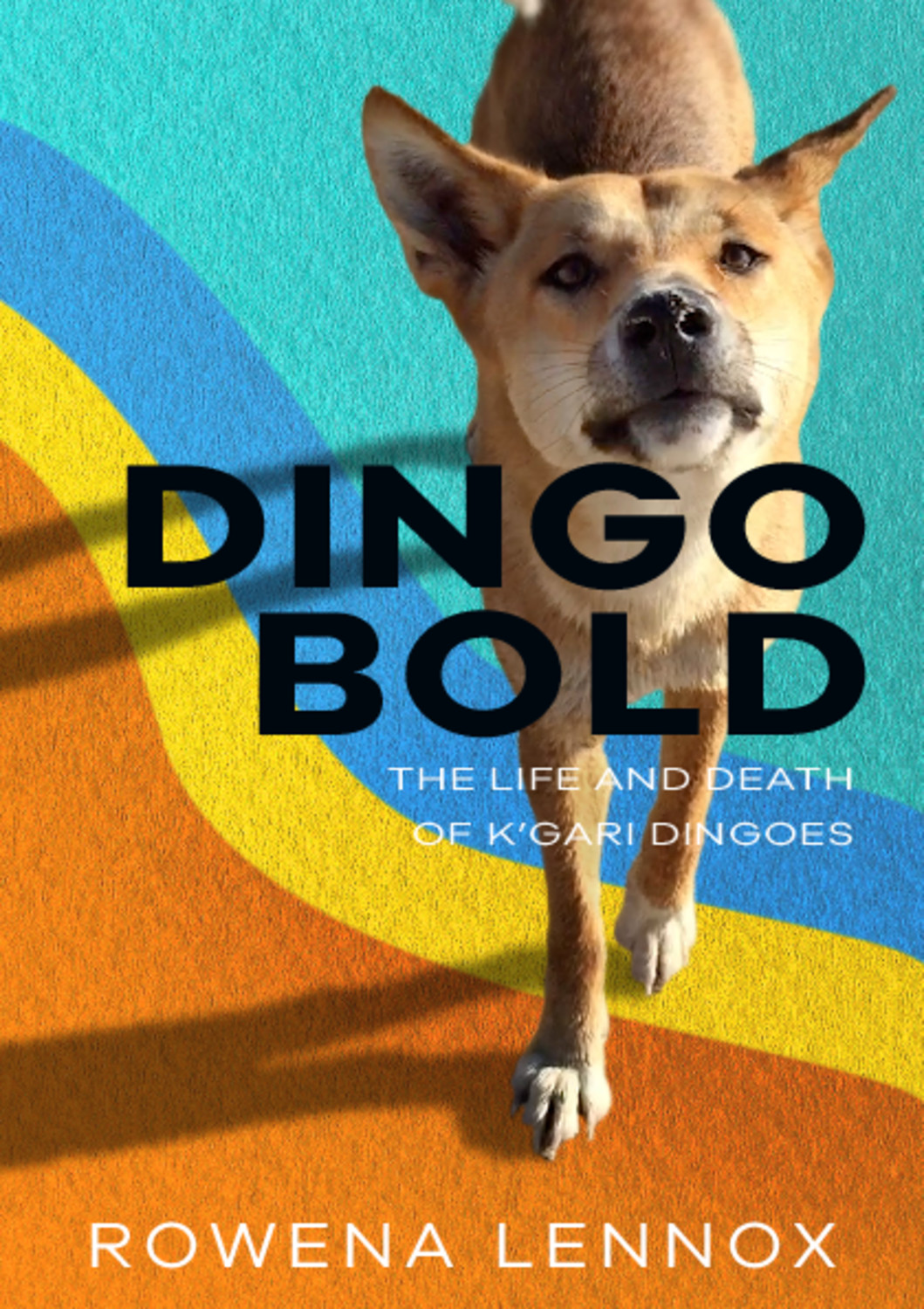 Dingo Bold: The Life and Death of K'gari Dingoes