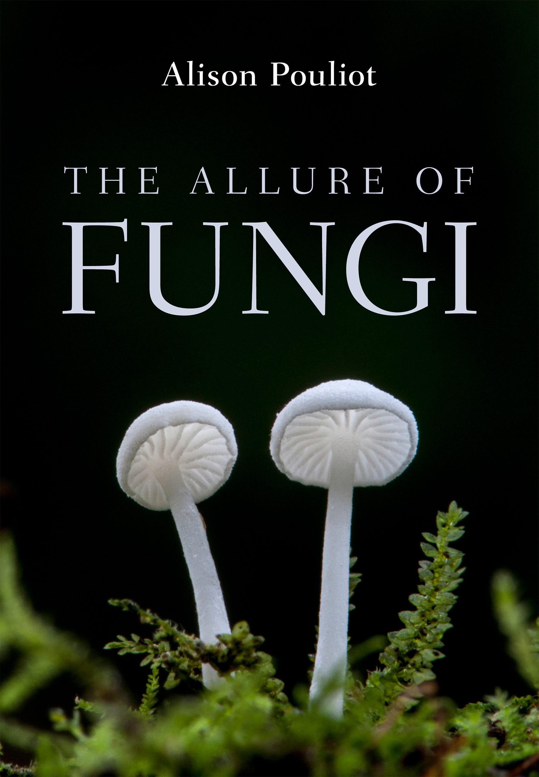 The Allure of Fungi