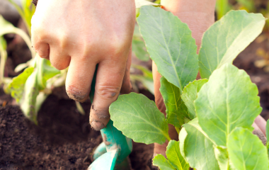 Mãos tratando o solo para o plantio de orgânicos.