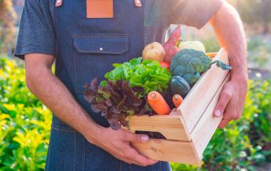 Pequeno produtor rural segurando uma caixa de verduras e legumes frescos em sua horta.
