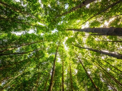 Floresta e biodiversidade.