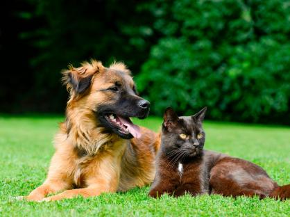 Cachorro e gato deitados juntos na grama.