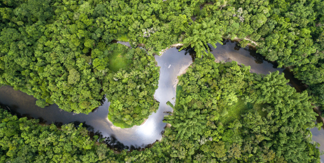 Vista aérea da floresta Amazônica.