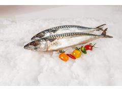 MACROU AFUMAT OCEAN FISH