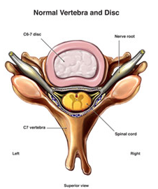 disque cervical sain