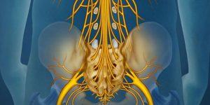 Amas de nerf ressemblant à la queue de cheval