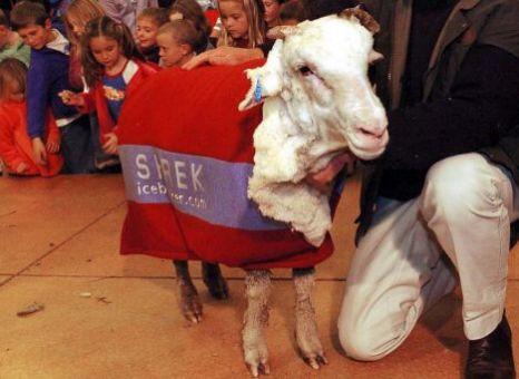 Shrek the Sheep after his shearing!