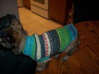 Chug Puppy Sweater by Susanne Namdar
