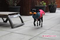 Erica Scarf - Doggie Cowl Go Erica Go!