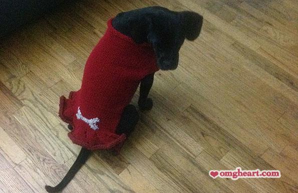 Pattern: Pup Squad Dog Sweater