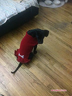 Erica's Pup Squad Sweater