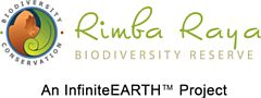 Indonesia's Rimba Raya: World First REDD+ Project Validated for its Impact on all 17 SDGs