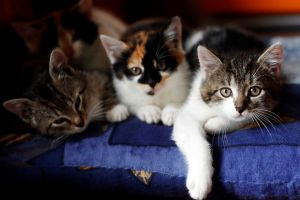 A community worker said the cats would have continued to leave viral traces in the room.