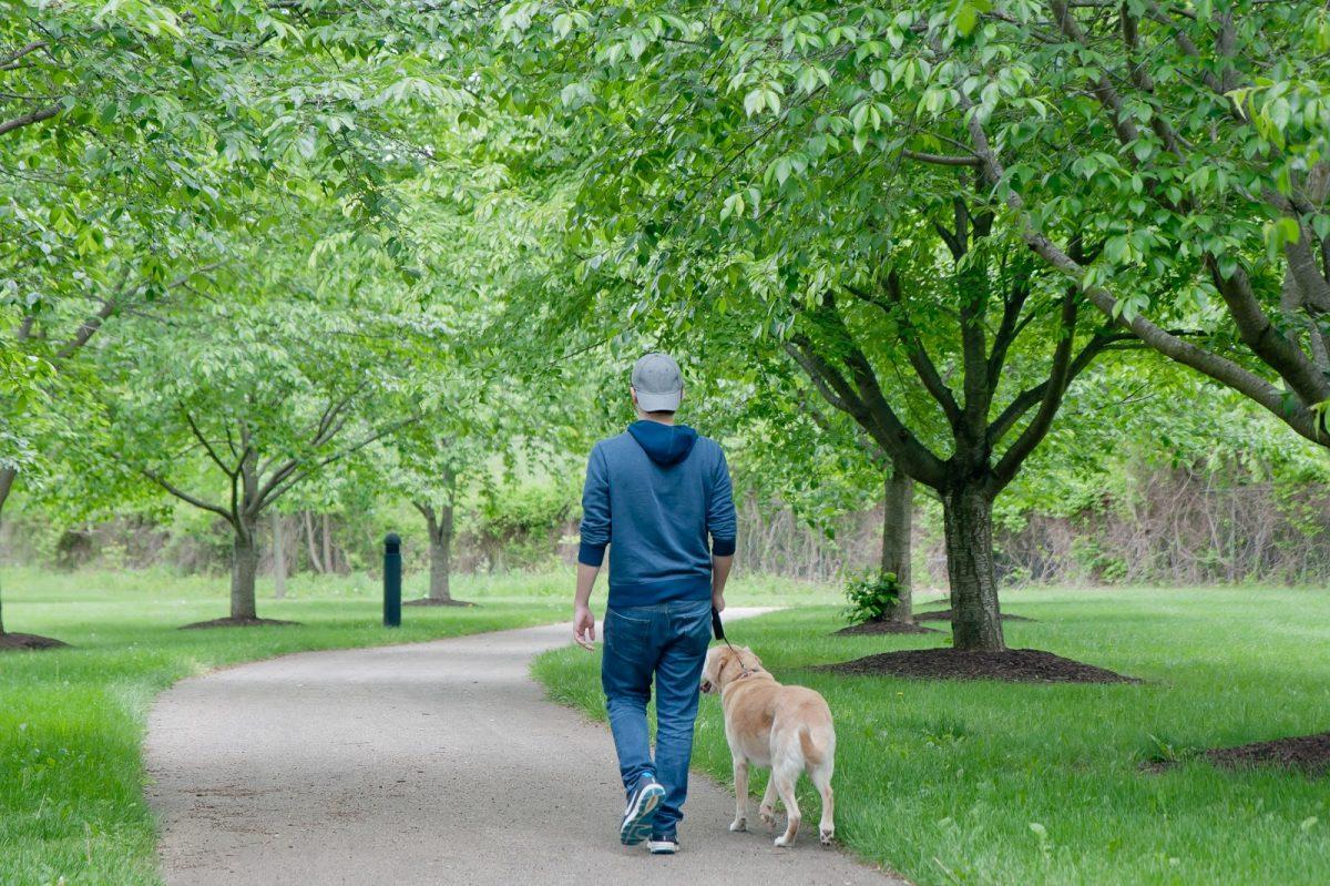 Ambler Dog Park