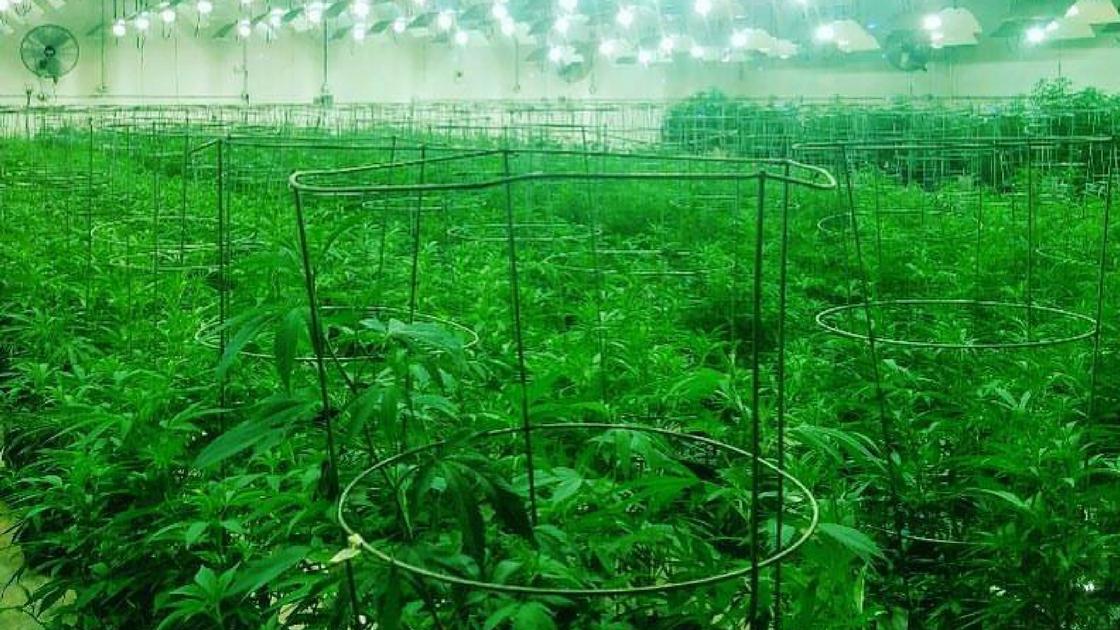 medical marijuana dangers