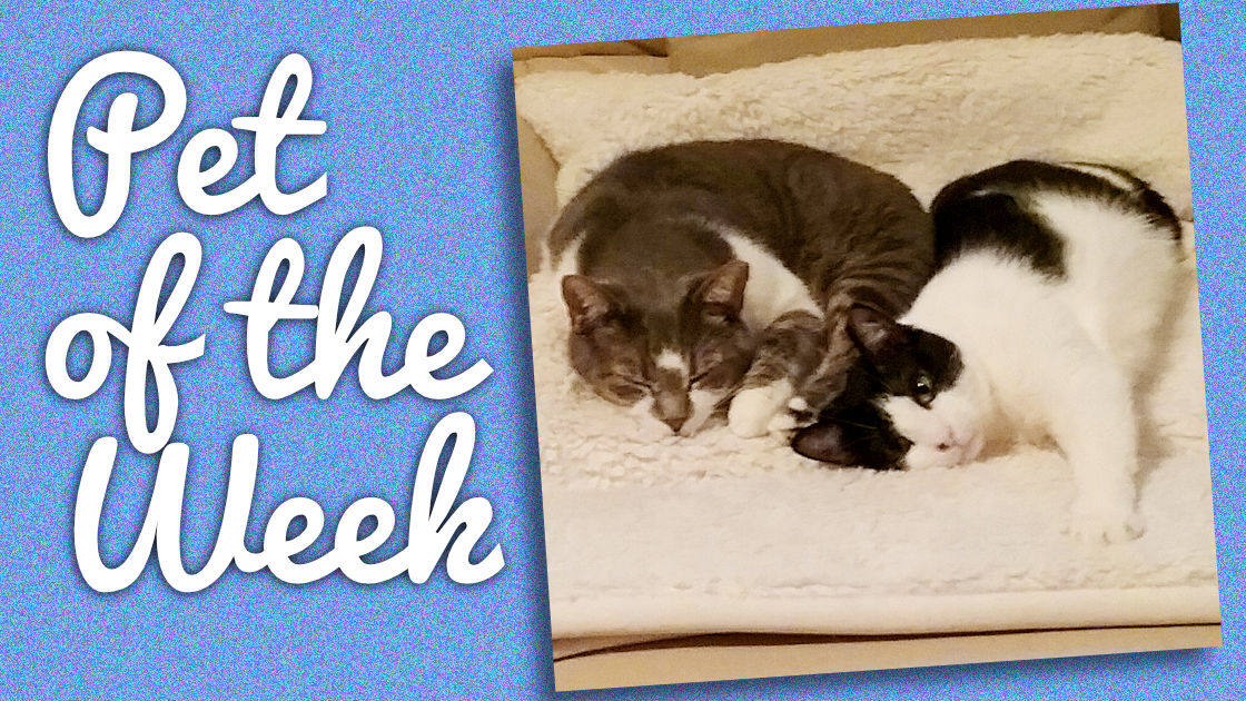 Pet of the Week: Sweetie and Pie Face