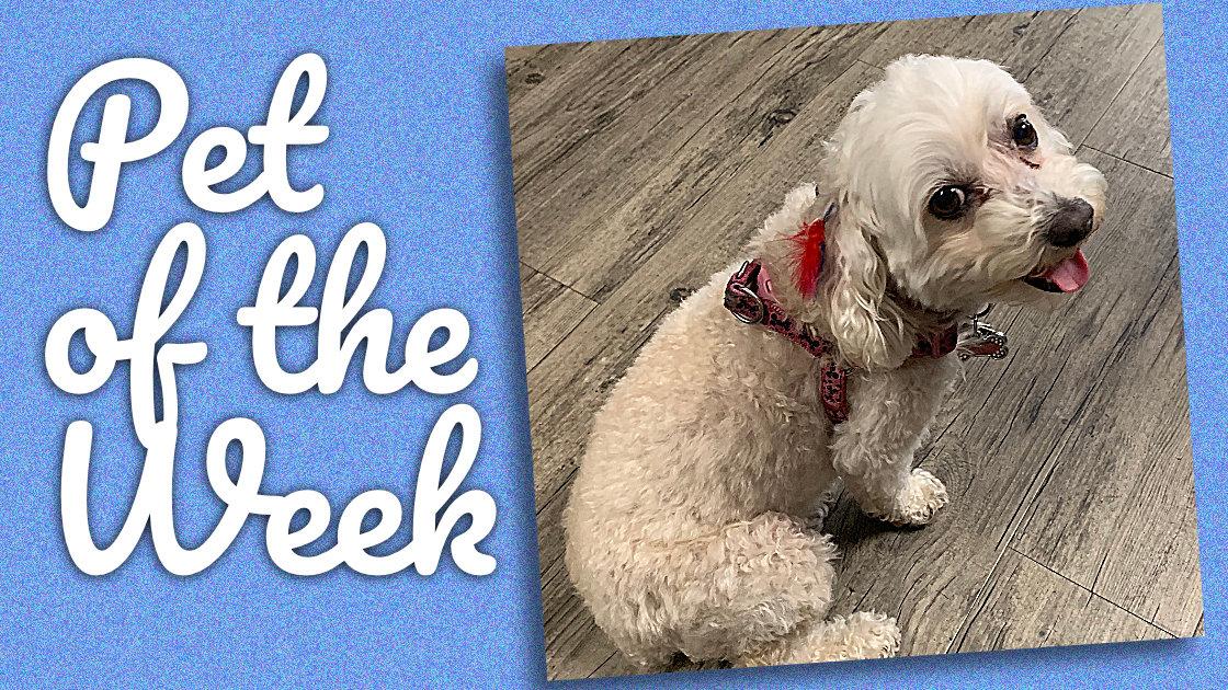 Sophie Pet of the week
