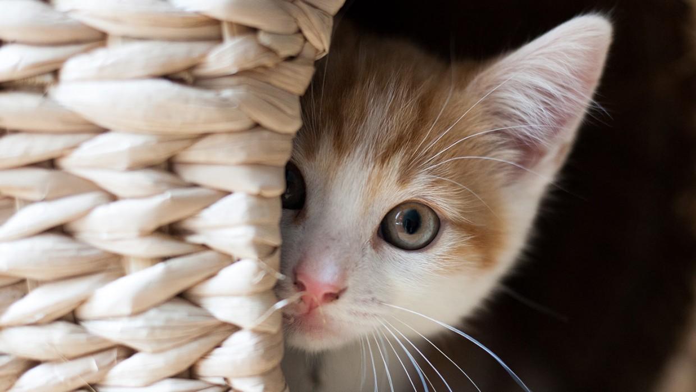 Kurioziteti Mund Të Ketë Vrarë Macen, Mos E Lër Të Të Vrasi Dhe Ty
