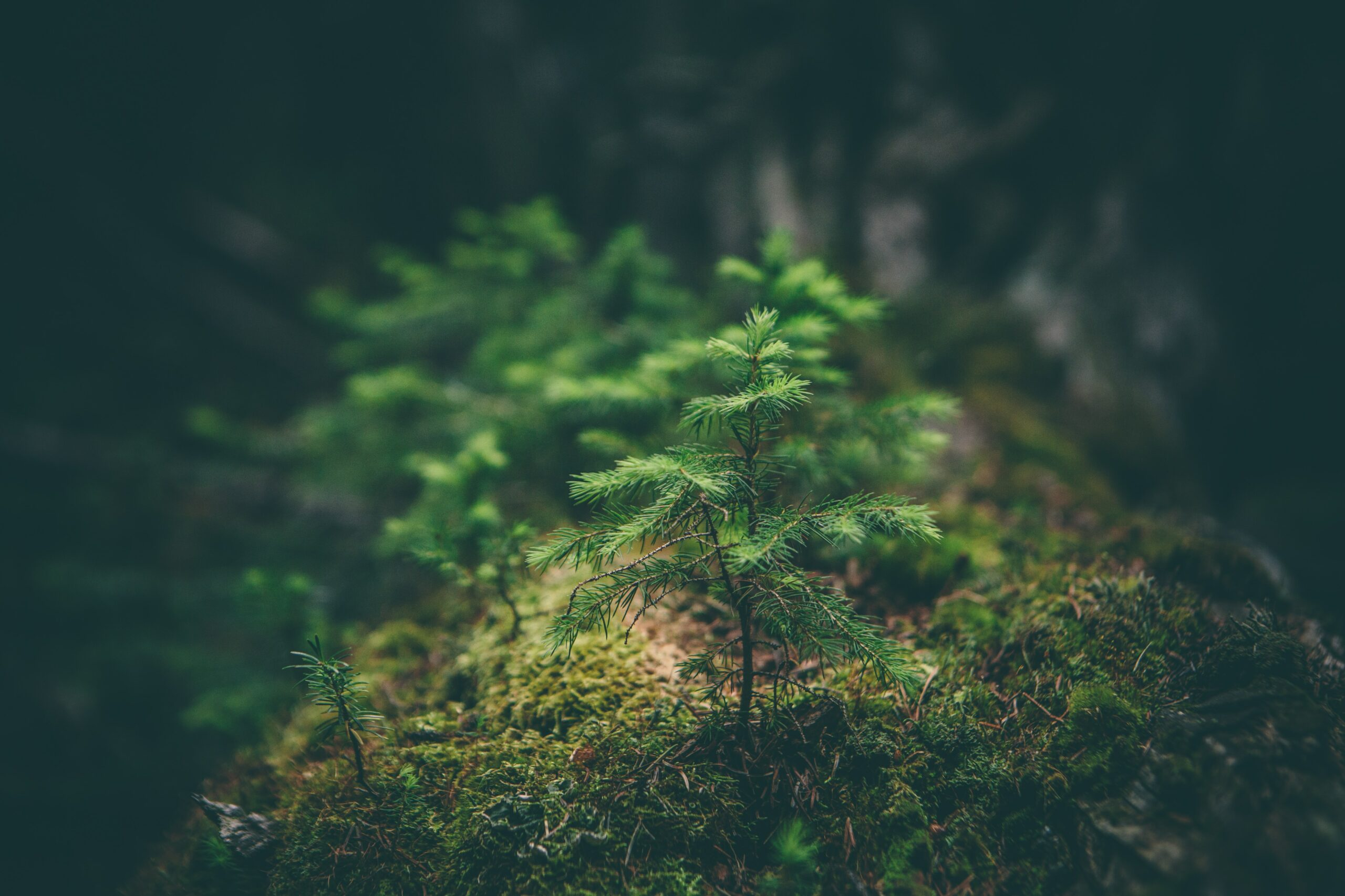 mbrojtjen e ambientit