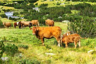Uzavřené trhy: Skončí až dvě pětiny farmářů