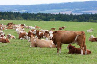České zemědělské firmy se začínají prosazovat na zambijském trhu
