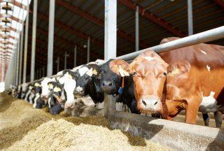 Američané využívají hnůj pro výrobu biometanu. Počet projektů roste