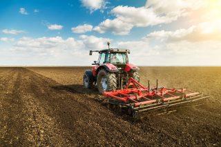 Rozkvět egyptského zemědělsko-potravinářského trhu