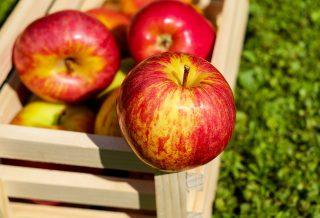 V Krasnodarském kraji RF byla zahájena výstavba největšího skladu ovoce na jihu Ruska