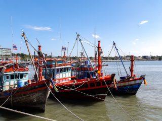 Nižší náklady a účinnější ochrana přírody. Digitalizace rybářství pomůže firmám i úřadům