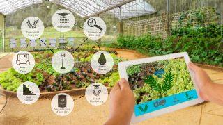 Standard Bank  investuje v JAR do cenově dostupných řešení agritech