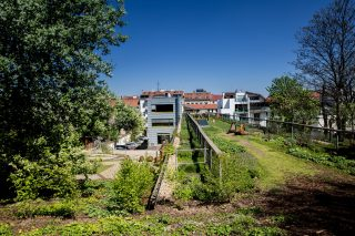 Zelené střechy osvěžují města. Mohou vznikat i na starších budovách