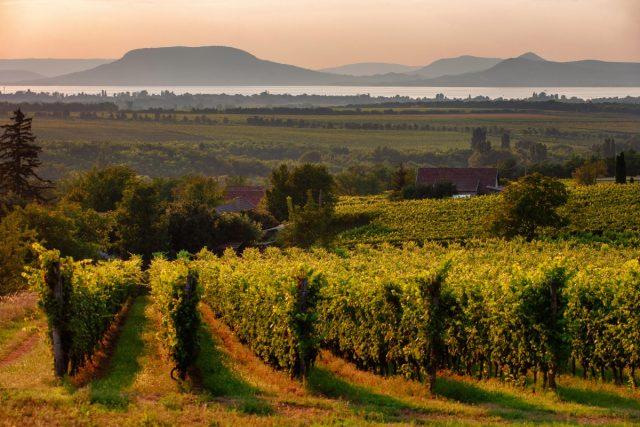 Vinice v Maďarsku