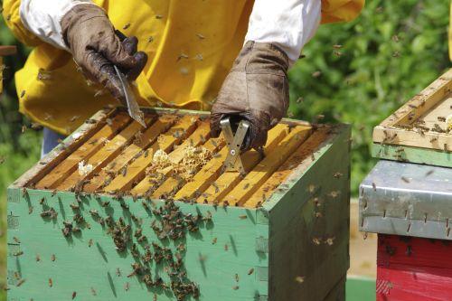 Včelaři získali na dotacích přes 64 milionů korun