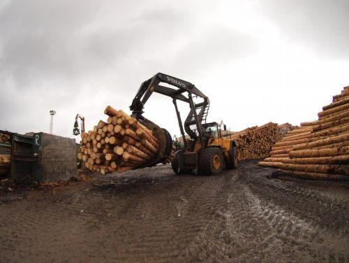 Dřevo, ilustrační foto. Zdroj archiv MF