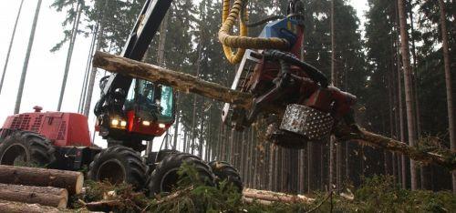 Těžba dřeva - ilustrační foto, autor: Pinkas Martin/Euro