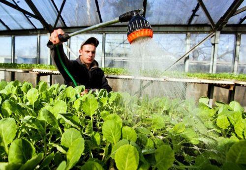 Pěstování zeleniny v Česku, ilustrační foto. Zdroj: archiv MF