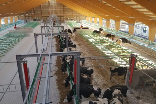 Roboti nastupují do kravínů. Česká firma Brunnthaller-CS staví stáje v celé Evropě