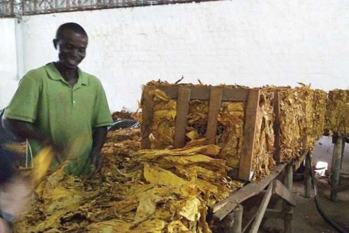 Tanzanie a Zambie představily šance v zemědělství