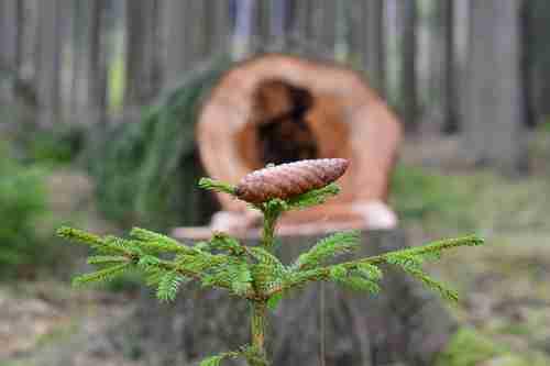 Lesnictví – statistický přehled