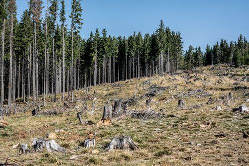 Kůrovcová kalamita: Malým těžařům dřeva pomůže ministerstvo i ČMRZB