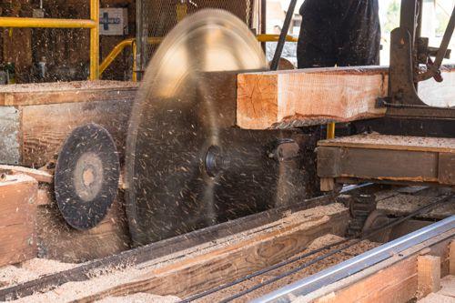 Pila nad zlato. V Česku chybí podniky na zpracování dřeva