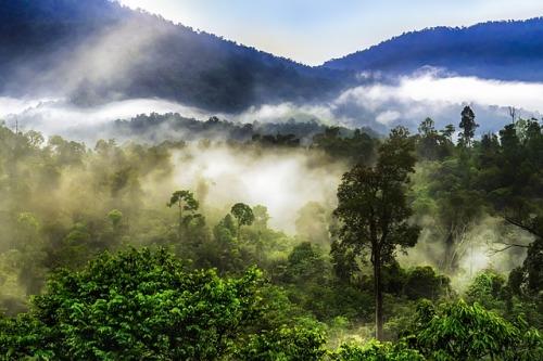 Čeští vědci začnou působit v Amazonii, cílem je bránit odlesnění